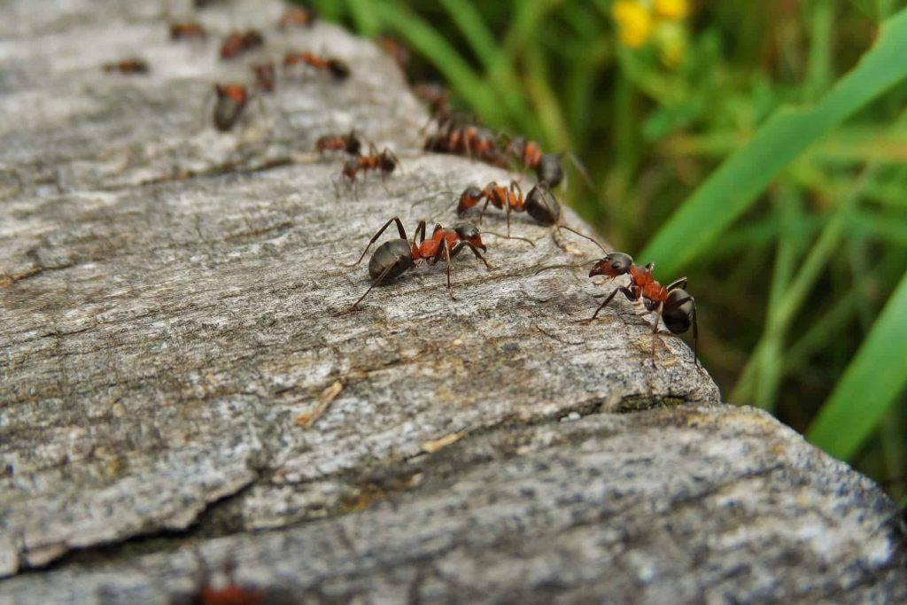 Was hilft gegen Ameisen? Tipps und Tricks