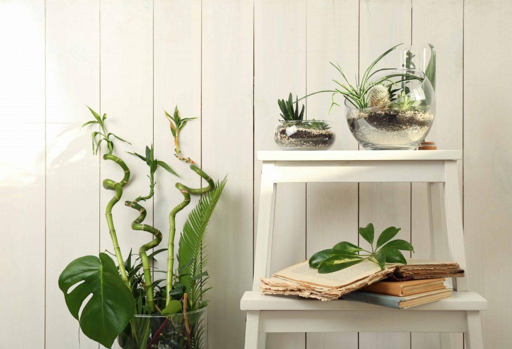 Immergrüne Pflanzen: Ein Blickfang zu jeder Jahreszeit