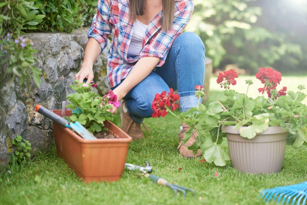 Blumen anpflanzen: In 5 Schritten zum farbenfrohen Garten