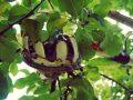 Obstpflücker: Test & Empfehlungen (10/20)