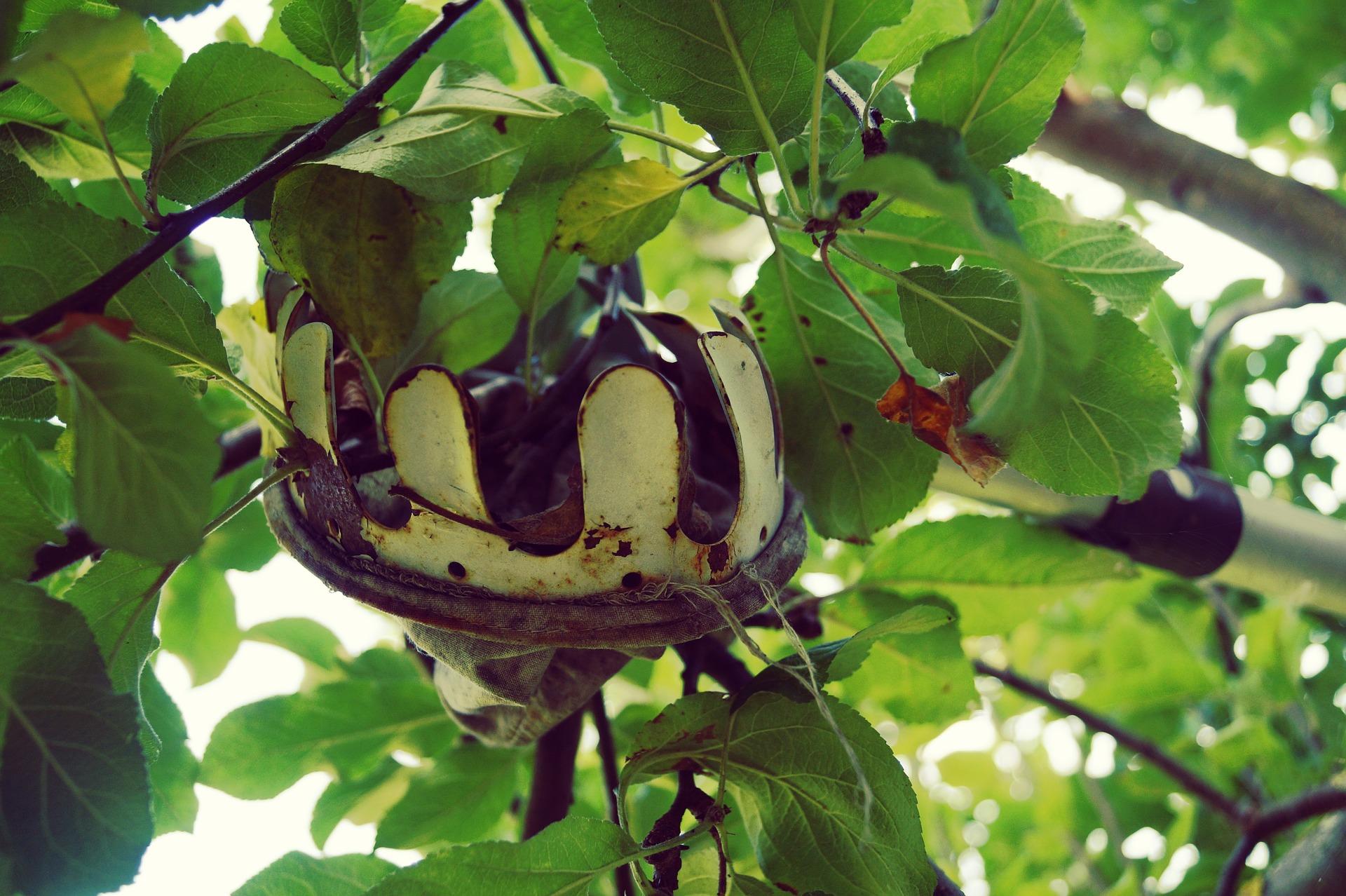 Obstpflücker: Test & Empfehlungen (01/21)