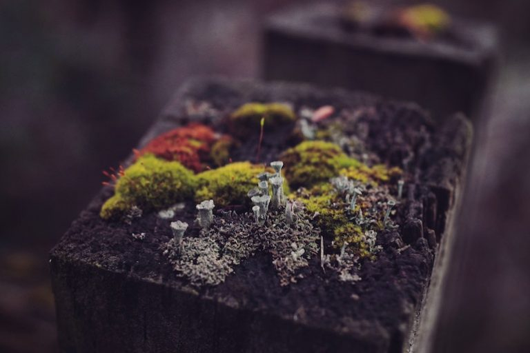 Holzkomposter-2