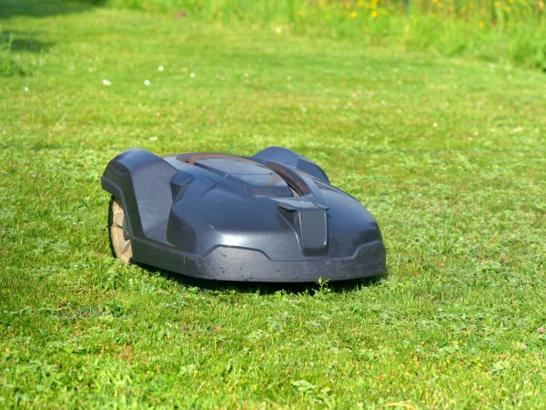 robotic lawnmower on the grass in garden